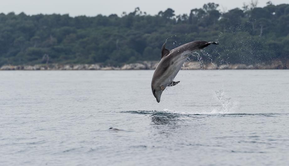 Une formation pour recenser les cétacés en Méditerranée débarque à Cuers... et c'est une première internationale
