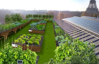 De l'agriculture sur les toits de Paris?