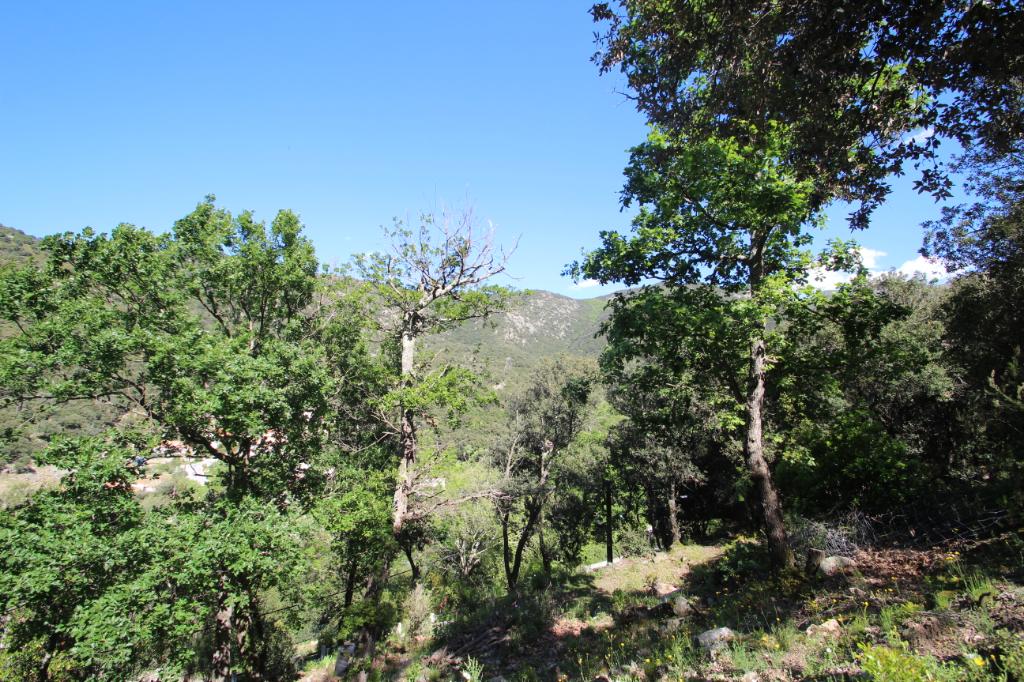 Vente terrain Sorede 118800€ - Photo 1