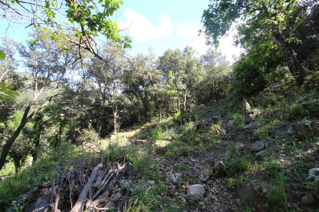 Vente terrain Sorede 118800€ - Photo 2