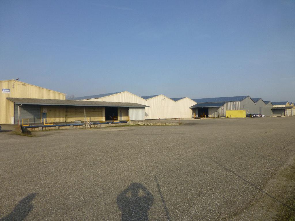 A LOUER  LOCAUX D' ACTIVITES  environ 11950 m²  MONTECH